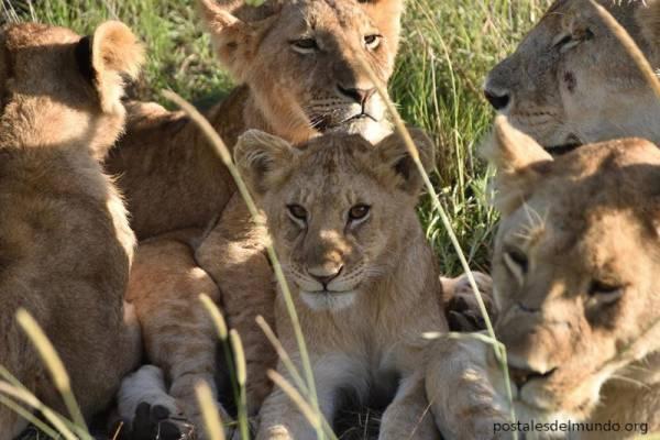 Explorando el Serengeti (III)