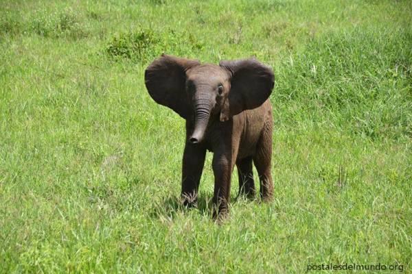 Elefantes en Tarangire