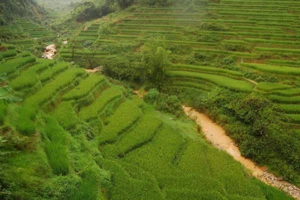 Los campos de arroz de Sapa