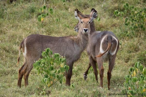 Arusha, un pequeño parque de Tanzania